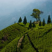 Darjeeling The Queen Of Hills