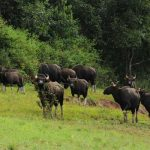 periyar_wildlife_sanctuary