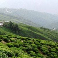 Have an unforgettable summer – Sip on tea in Darjeeling the local way