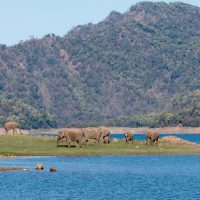 Best time to visit Jim Corbett National Park Uttarakhand