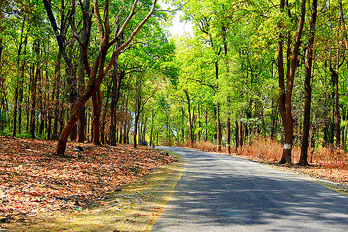 Jim Corbett Road